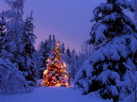 snow covered christmas tree holidays pinterest