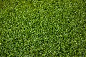 Rasen Vertikutieren Wann : perfekter rasen ~ Eleganceandgraceweddings.com Haus und Dekorationen