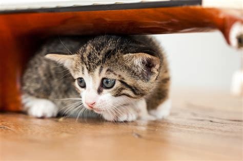 animal cat cruelty daddy domestic wallflower sadness violence istock dictionary cases emergency pet wallflowers cats