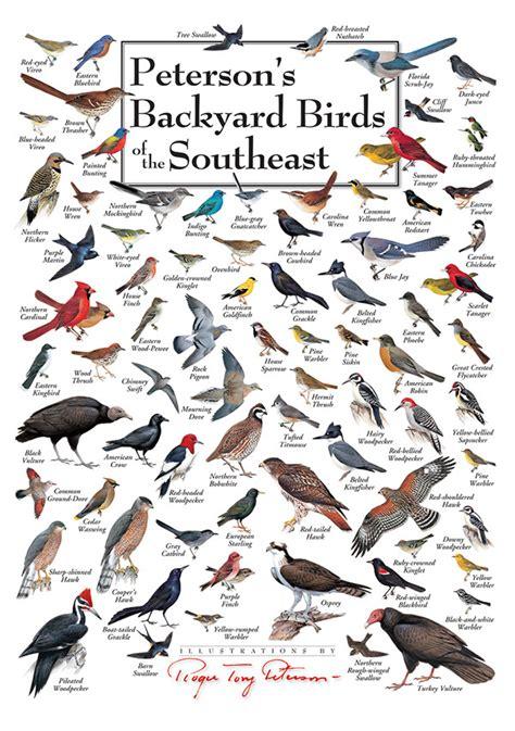 Backyard Identification by Peterson Bird Posters Design On Behance