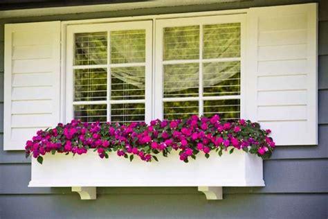beautiful window box plants wearefound home design