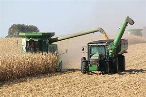 corn field | Prairie Smoke Notes