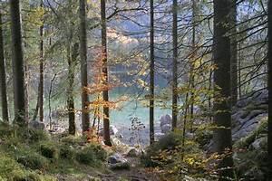 Bäume Umpflanzen Jahreszeit : kostenlose foto baum wasser wald wildnis weg see panorama herbst jahreszeit grat ~ Orissabook.com Haus und Dekorationen