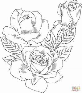 Kolorowanka Róża wielokwiatowa Double Delight ...