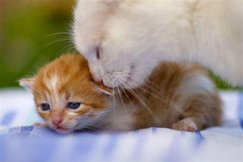 Cat Comfort