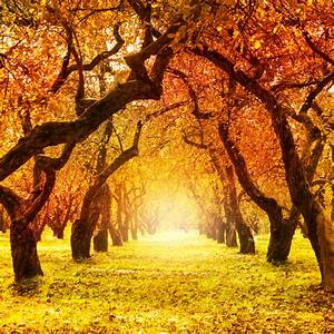 27 Best Autumn Quotes | Messages and Sayings For The Fall ...