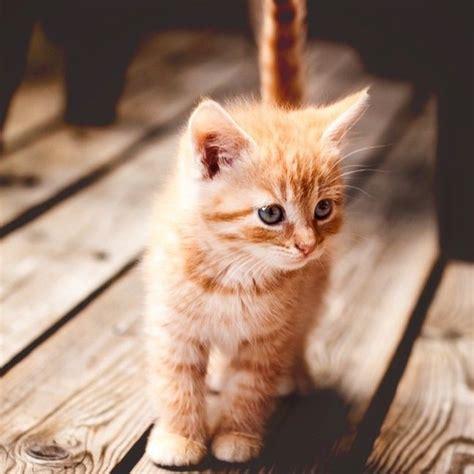 pin  diane bleything  cats pinterest perros gatos