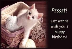 happy birthday with cats cat wish happy birthday nicewishes