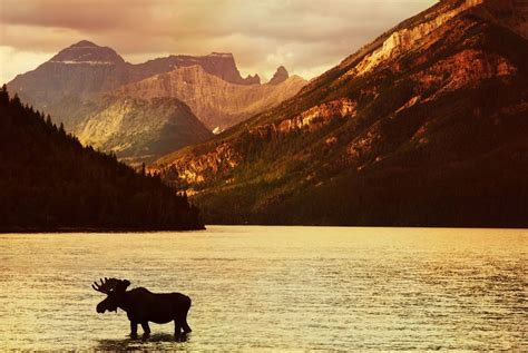 Buffalos and Badlands of Alberta Self Drive | Holidays ...