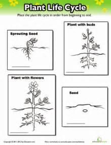 Plants Worksheets Plant Cycle Worksheet Education Com