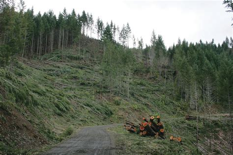 Seeking balance in Oregon's timber country (A New Forest ...