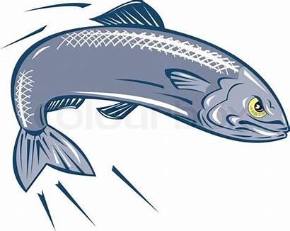 Angry Fish Sardine Jumping Vector Cartoon Colourbox