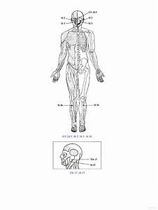 Accupressure U0026 39 S Potent Points  A Guide To Self