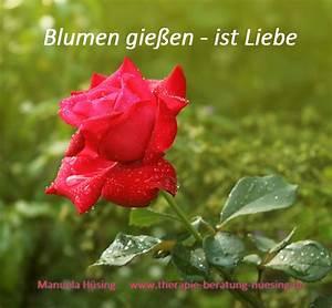 Wie Oft Blumen Gießen : blumen gie en ist liebe therapie beratung ~ Orissabook.com Haus und Dekorationen