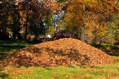 Fall Lawn Yard Leaves Pile Care Istock