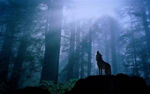 Wolf Wallpaper Widescreen HD 14122