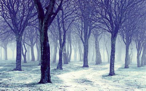 winter tree quotes quotesgram