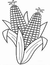 Corn Coloring Pages Cob Stalk Fall Harvesting Indian Drawing Harvest Stalks Colouring Line Easy Ears Ear Preschool Outline Clip Template sketch template