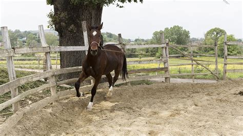 How To Lunge Your Horse For The First Time