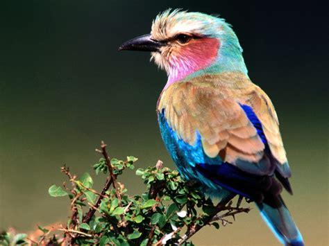 Animals And Birds Wallpaper - hd flowrs nature birds animals wallpapers