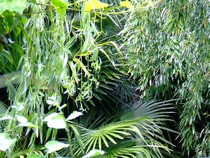 Tropical Plants Eyfs Ks1 Early Trees Plant