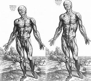 Medical Anatomy Model Instructions Human Torso