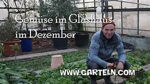 Gemüse Im Winter : gem se im glashaus im winter ernten update dezember youtube ~ Pilothousefishingboats.com Haus und Dekorationen