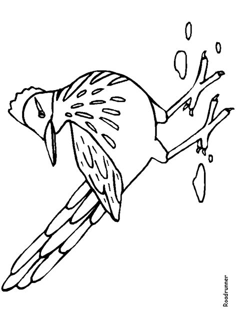 printable roadrunner animals coloring pages