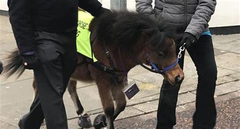 blind dogs eye seeing horse afraid he