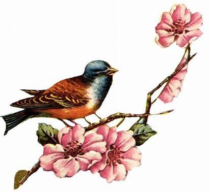 Bird Frame Birds Flowers Pink Printable Clipart
