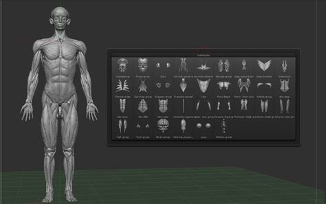 Full Anatomy Model Free Download Zbrushtuts