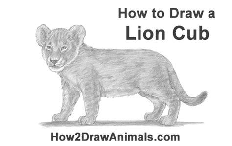 draw  lion cub