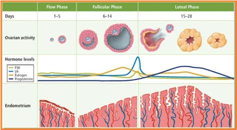 Masalah Pada Kehamilan 3 Bulan Kusmandanu Proses Menstruasi