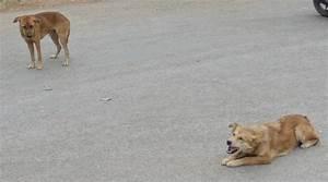 Enlever Odeur Urine Chien : enlever odeur chien maison odeurs de chien dans la maison ~ Nature-et-papiers.com Idées de Décoration