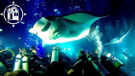 giant manta rays dance day night dives  kona hawaii