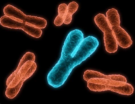 What Is The Y Chromosome?
