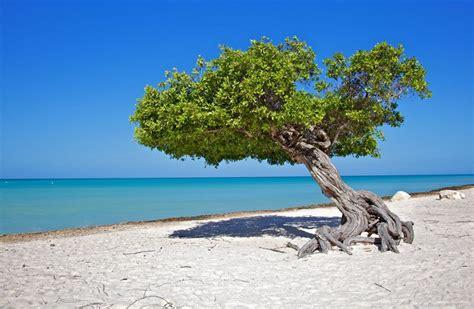 Aruba Divi Of Illegal Things Seeingm