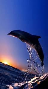Schöne Delfin Bilder : 44 besten delphin flipper co bilder auf pinterest delphine fische und meerestiere ~ Frokenaadalensverden.com Haus und Dekorationen