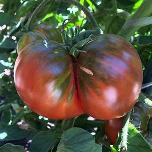 Tomato Varieties, Types of Tomatoes, Heirloom Tomatoes