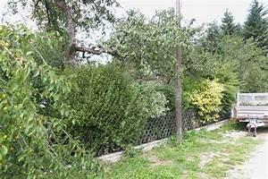 Kirschlorbeer Wann Pflanzen : hecken schneiden hecken richtig schneiden zeitpunkt form ~ Lizthompson.info Haus und Dekorationen