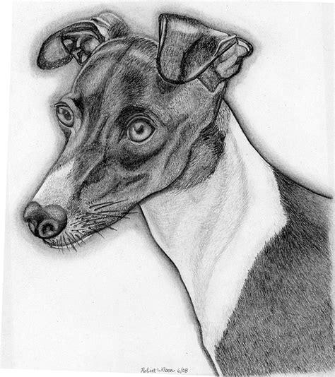 foto de Cinderella Italian Greyhound Drawing by Robert Wilson