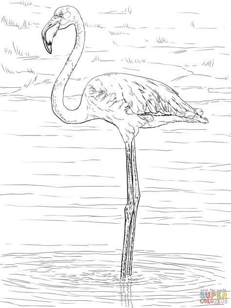 Flamingo Kleurplaat by Birthday Flamingo Coloring Pages Coloring Home