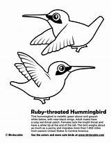 Hummingbird Coloring Ruby Throated Drawing Getdrawings sketch template