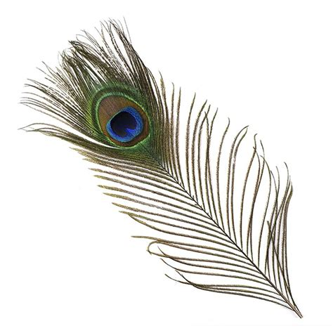 box springs peacock feather 100 cm with eye