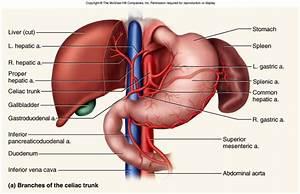 Bio 208 Study Guide  2012-13 Fickas