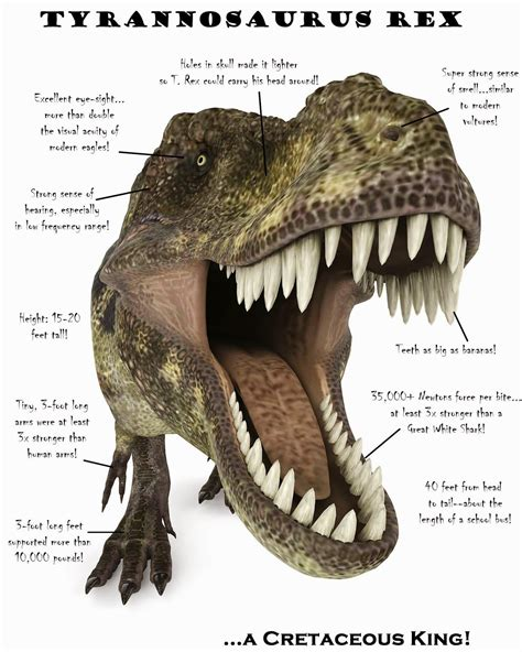 A New Science Project How To Get A T Rex Poster Kid