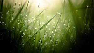 Wallpaper Grass, 4k, HD wallpaper, green, drops, dew, sun