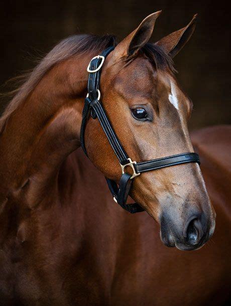 eyes largest horses land animal move kaynak supportemotionalanimal floss mental according edition magazine any degree vision horse independently human different