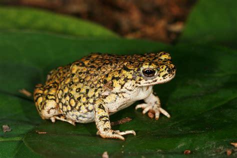 photo quiz  amphibians