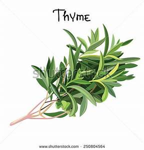 Thyme Stock Images, Royalty-Free Images & Vectors ...